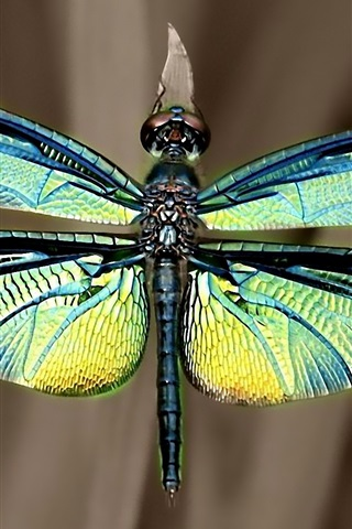 iPhone Wallpaper Iridescent dragonfly wings