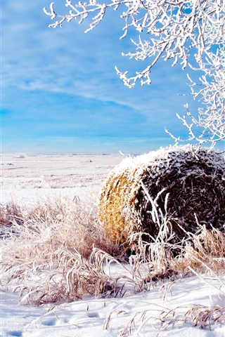 iPhone Wallpaper The snow of winter wheat fields