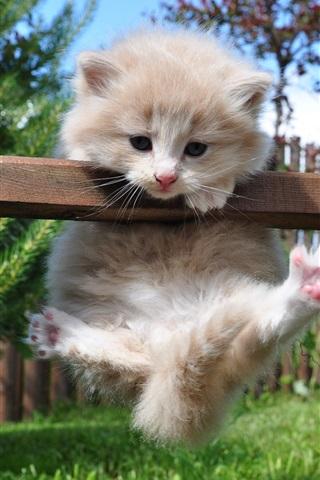 iPhone Wallpaper Cute kitten playing