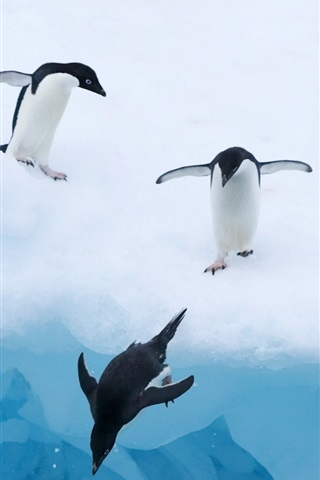 iPhone Wallpaper Penguins ice snow water