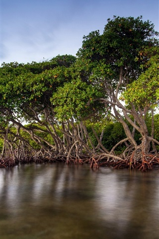 iPhone Wallpaper The mangrove forests of the lake scenery