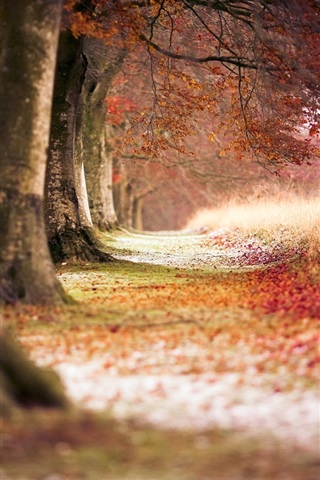 iPhone Wallpaper Autumn red maple forest
