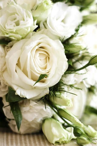 iPhone Wallpaper Bouquet of white roses