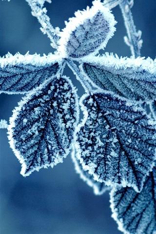 iPhone Papéis de Parede Manhã fria de inverno, a geada deixa