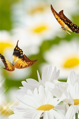 Daisy And Butterfly 640x960 Iphone 4 4s Wallpaper Background Picture Image