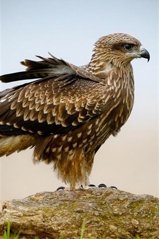 iPhone Wallpaper Hawk's beak