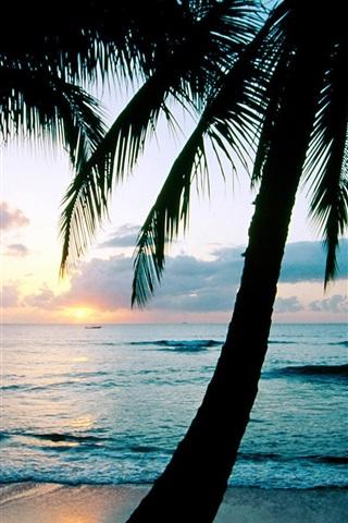 iPhone Wallpaper Ocean sunset palm trees