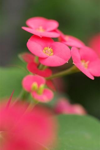 iPhone Wallpaper Pink flowers green leaves blur macro