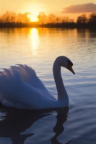 iPhone Wallpaper Swan lake at dusk