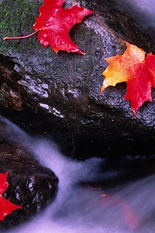 iPhone Wallpaper Canadian landscape, red maple leaf in streams
