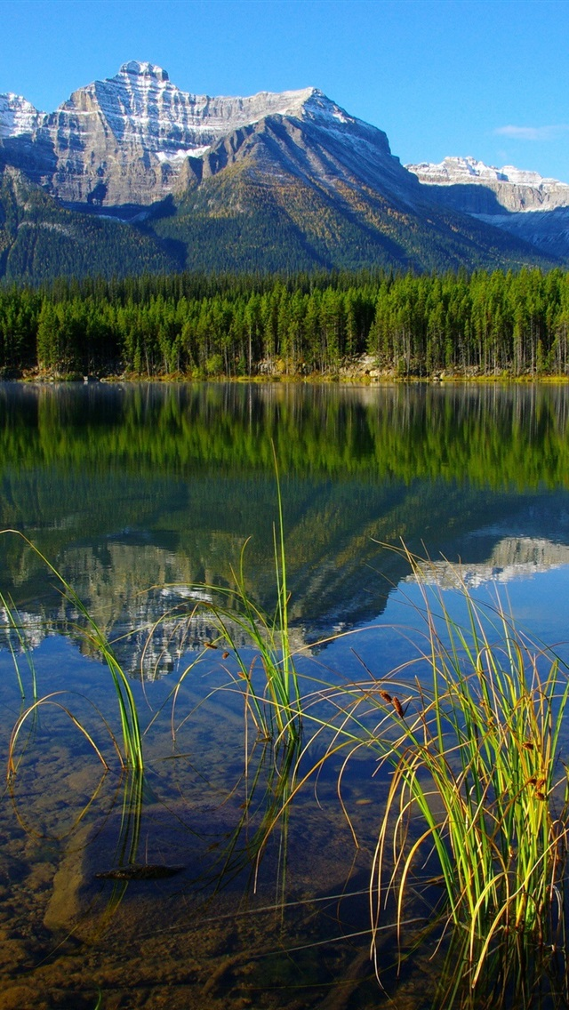 壁纸 加拿大班夫国家公园 2560x1600 HD 高清壁纸, 图片, 照片