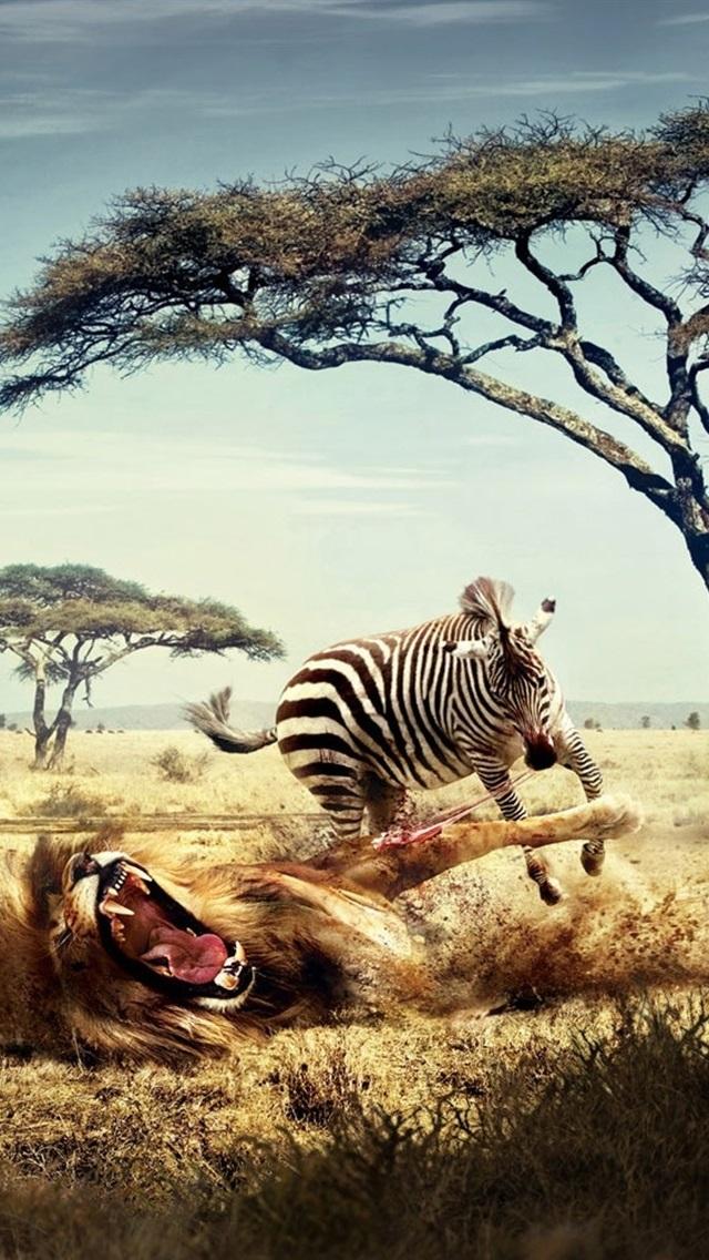 シマウマの戦いライオン 創造的な絵 640x1136 Iphone 5 5s 5c Se 壁紙 背景 画像