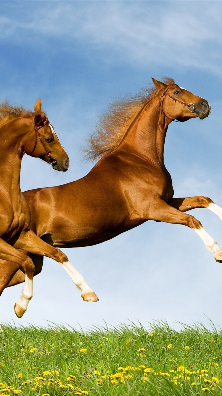 Two Horses 750x1334 Iphone 8766s Wallpaper Background Picture