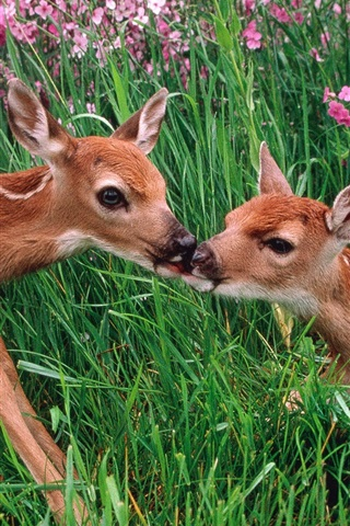 iPhone Wallpaper Two sika deer in the bushes