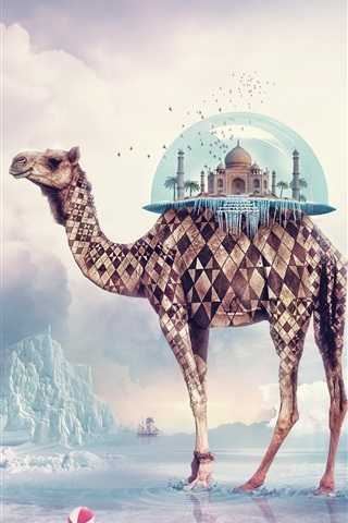 iPhone Wallpaper Creative pictures, camel India Paradise