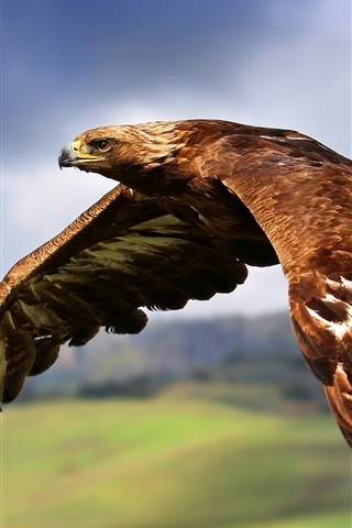 iPhone Wallpaper Eagle flying in the sky