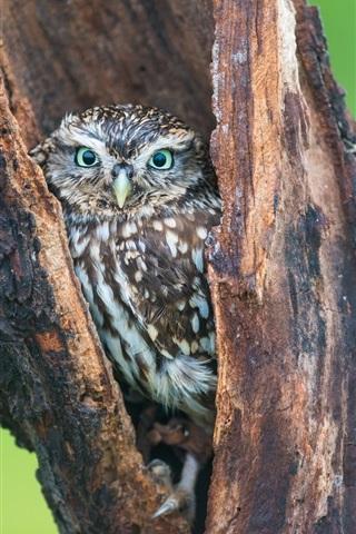iPhone Wallpaper Owl in tree