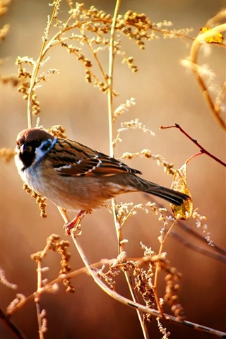 iPhone Wallpaper Sparrows in the fall