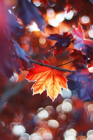 iPhone Wallpaper Autumn leaves, red maple leaves