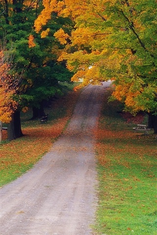 iPhone Wallpaper Autumn maple forest road
