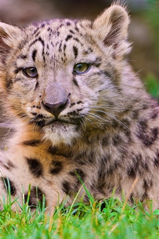 iPhone Wallpaper Cute little leopard close photography