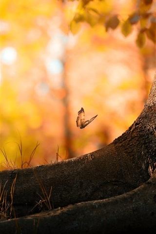 iPhone Wallpaper Forest summer butterflies