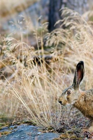 iPhone Wallpaper Natural bushes hare close-up