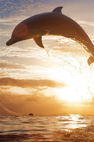iPhone Wallpaper Splashing sea waves of dolphins jumping in the sunset