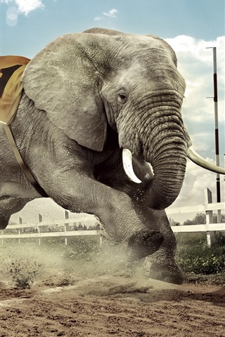 Creative Design Dog And Elephant Race 640x1136 Iphone 5 5s