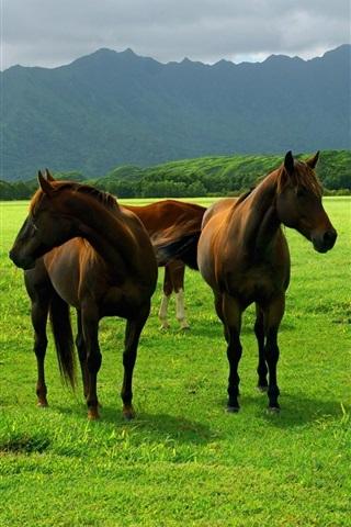 iPhone Wallpaper Horse grazing on the grasslands