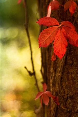 iPhone Wallpaper Red leaf macro, blurred background