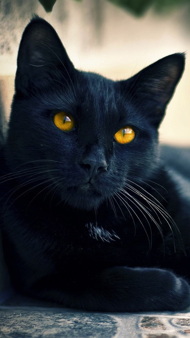 Street Black Cat Eyes 640x1136 Iphone 55s5cse Wallpaper