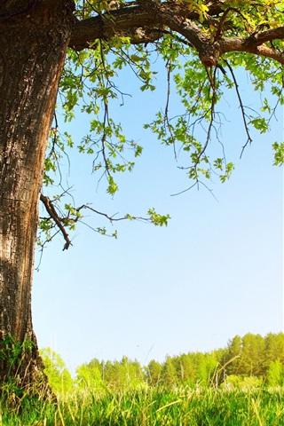 iPhone Wallpaper Summer sun under a tree