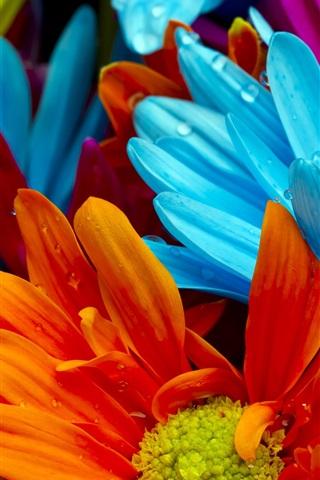 iPhone Wallpaper The bright colorful of chrysanthemum petals