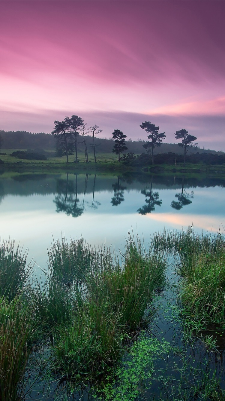 Dusk Beauty Tranquil Lakes Green Trees Purple Sky