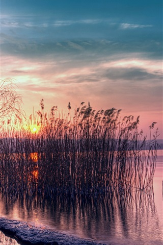 iPhone Wallpaper Twilight beautiful landscape, quiet lake, reed, sunset
