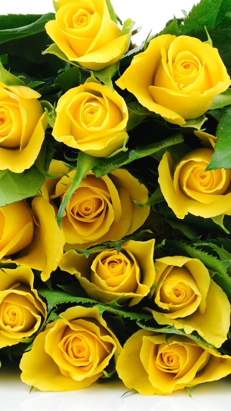 Картинка желтые розы на телефон, детский сад анимация