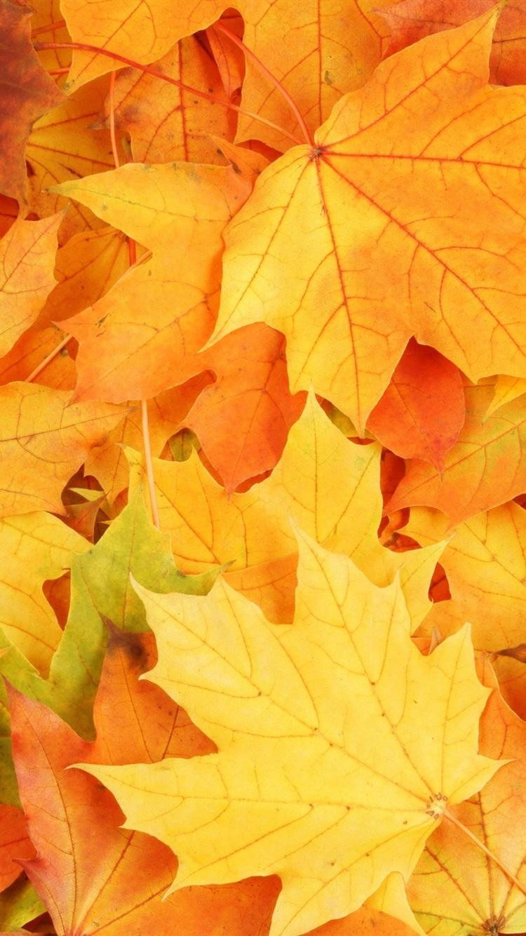 Картинки на телефон осенние листья