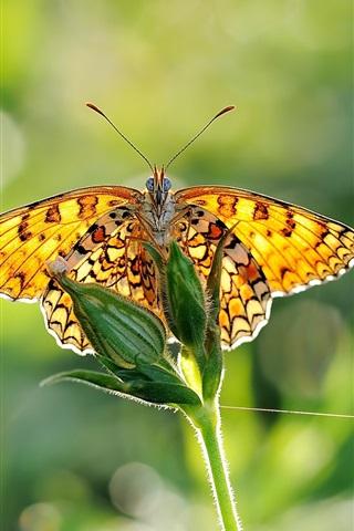 iPhone Papéis de Parede Asas de borboleta, plantas verdes, luz solar, close-up