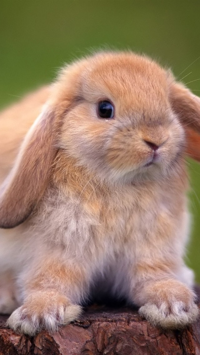 Cute Rabbit Standing On A Tree Stump 640x1136 Iphone 5 5s 5c