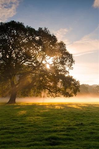 iPhone Wallpaper Early morning beauty, trees, grass, fog, sunrise, soft light