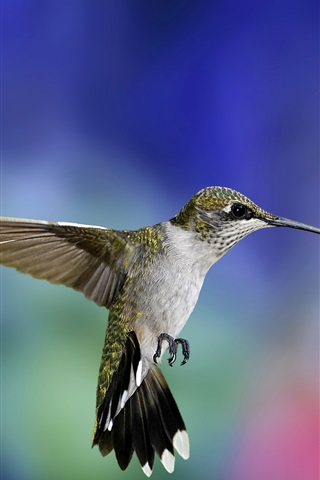 iPhone Wallpaper Hummingbird flight close-up, colorful blurred background