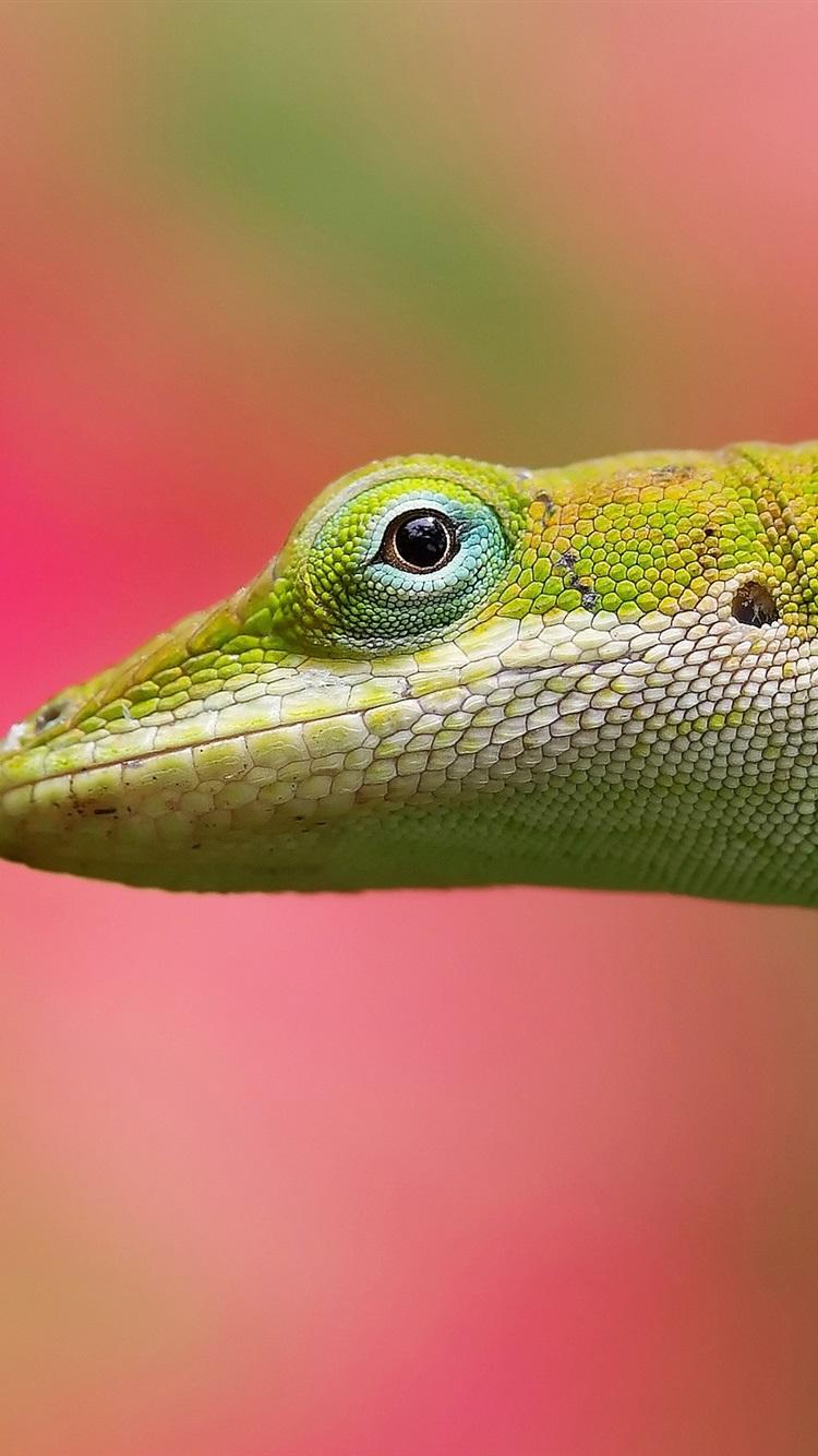 Wallpaper Lizard Close Up Blurred Background 2560x1600 Hd
