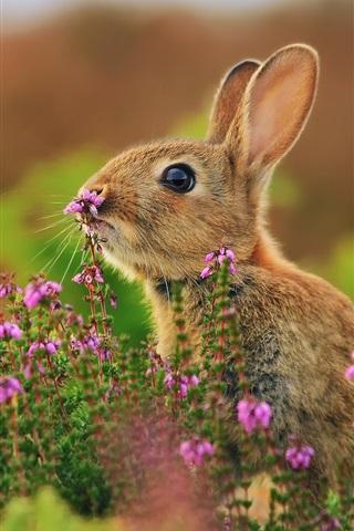 iPhone Wallpaper Animals close-up, hare, flowers, grass
