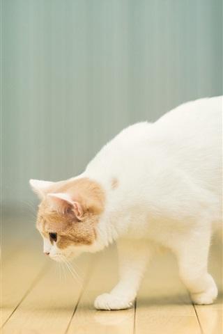 Cat Want To Drink Milk 640x1136 Iphone 5 5s 5c Se Wallpaper
