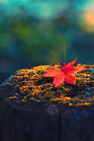 iPhone Wallpaper Maple leaf, tree stump, autumn