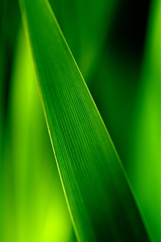 iPhone Wallpaper Close-up of green grass blades, leaves soft focus photography