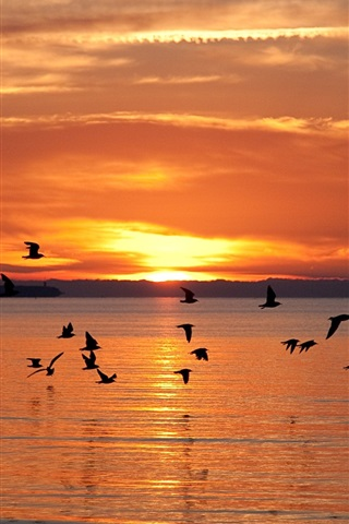 iPhone Wallpaper Latvian landscapes, fly birds, lake, sunset