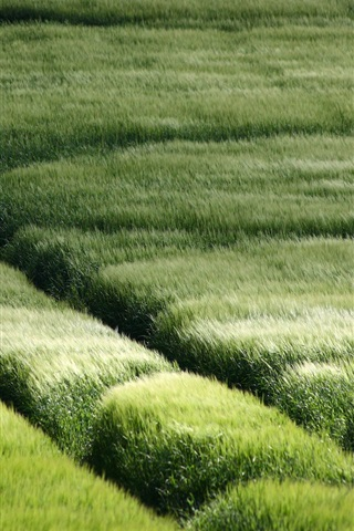 iPhone Wallpaper Lush grassland scenery