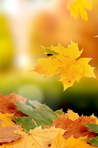 iPhone Wallpaper Maple leaves falling in autumn